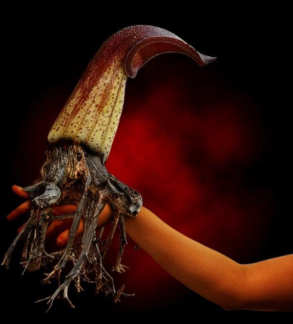 Fantasy Flower Creature Photoshop Tutorials