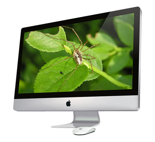 How to Create a Photorealistic iMac and Magic Mouse