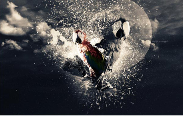 Stunning Parrot Photo Manipulation tutorial in Photoshop
