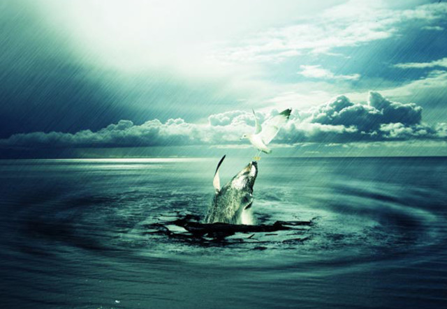 Photo Manipulation of a Whale Stealing from a Seagull tutorial in Photoshop