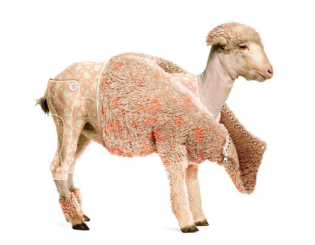 Create a Lambs Coat tutorial in Photoshop