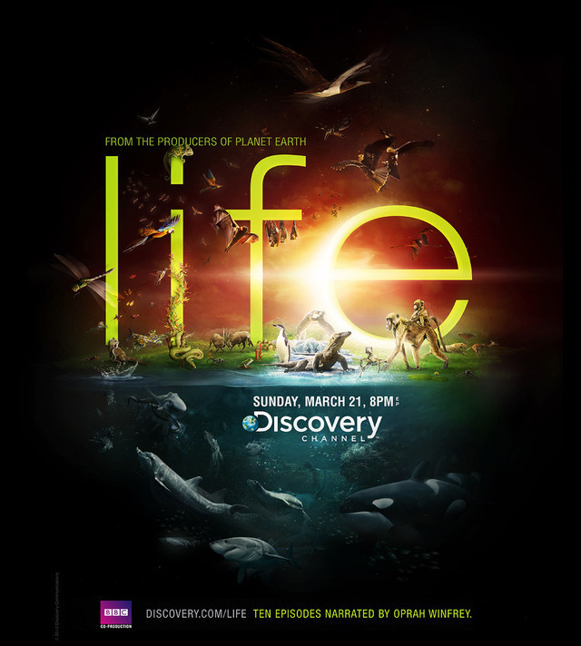 Publicidad Impresa - Discovery Channel - Vida