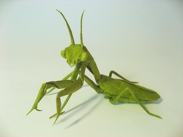 Praying Mantis (female)