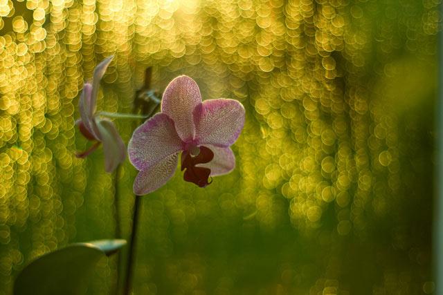 Its Raining Bokeh is an example of Beautiful Bokeh Photography