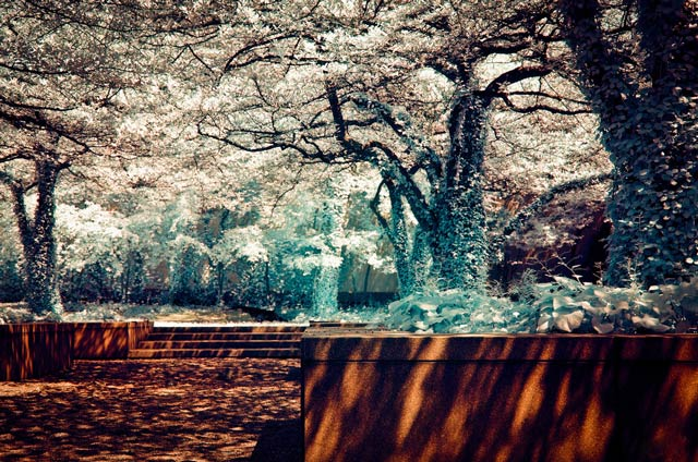 infrared photography Summer or Winter