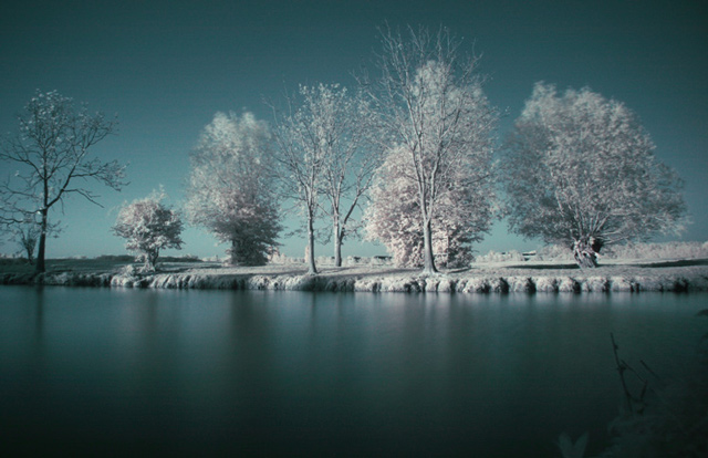 infrared photography Port Meadow Trees