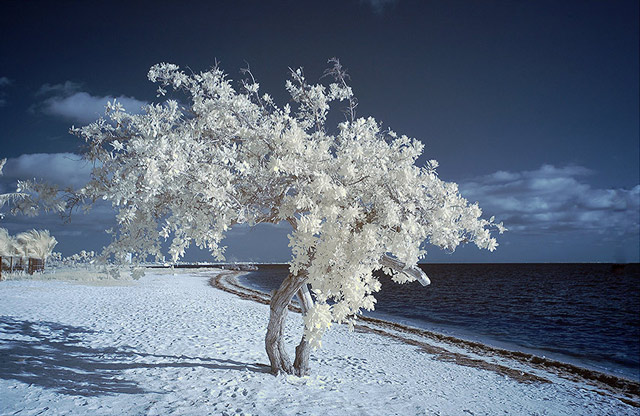 shot infrared By the Sea