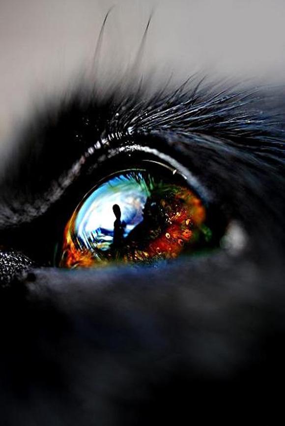 Dog Eye photography super macro