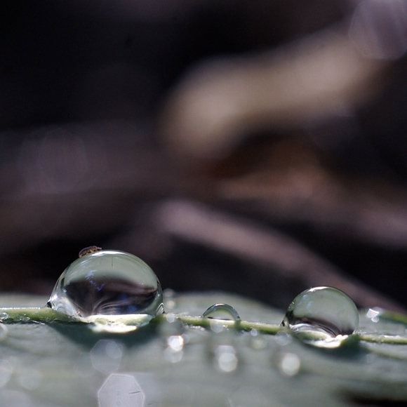 Water Drop Macro photography super macro