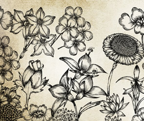 Hand-Drawn Flowers Pack freebie