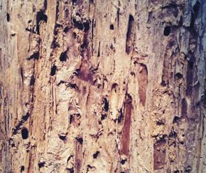 free Older Wood Texture