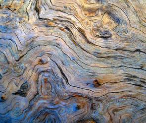free Tree Eddy texture