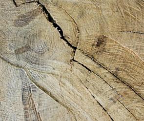 free Wood Slice Texture