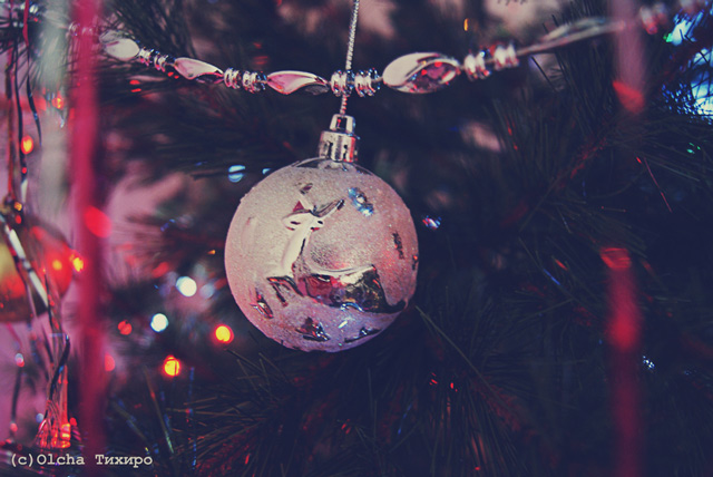 Christmas Day in a gallery of Seasonal and Christmas Photography