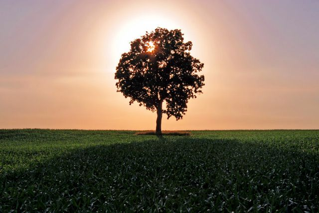 Lone Backlit Tree backlit photography example