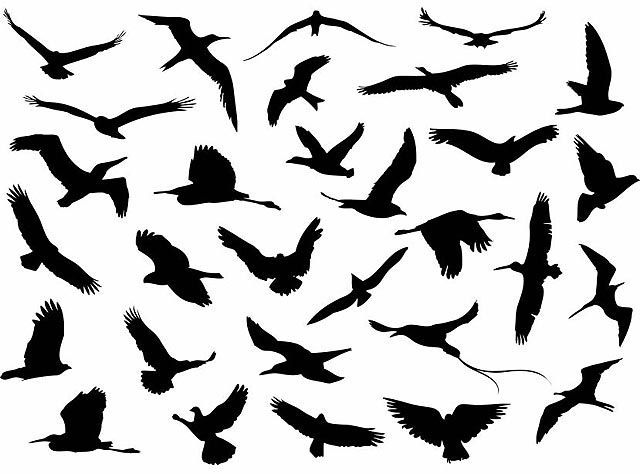 Vector Flying Birds Silhouette fresh best free vector packs kits