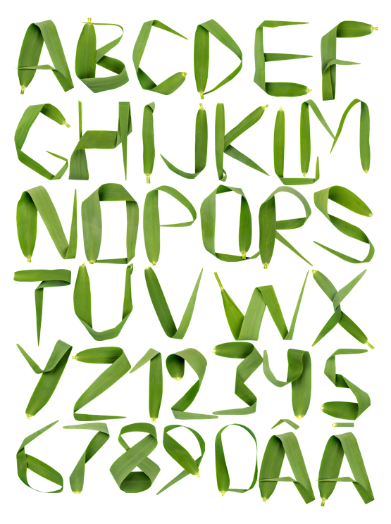 reed Font handmade