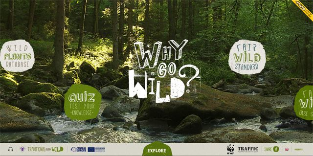 The Why Go Wild website above uses some incredibly unique typography for its headers and titles
