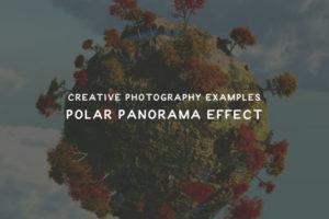 polar-thumb