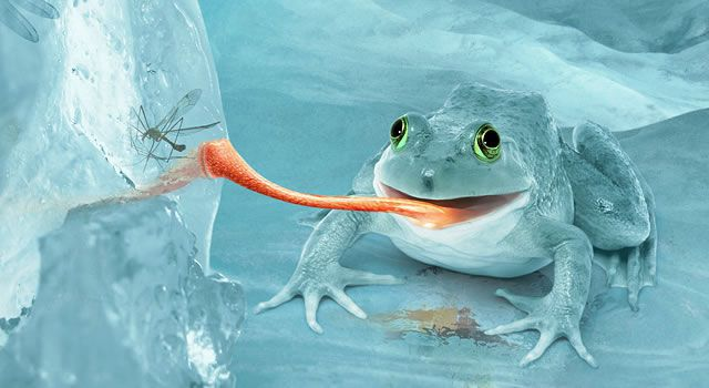 Fictional Arctic Snow Frog Photoshop