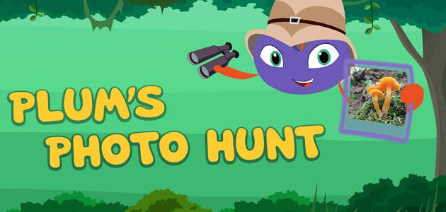 Plums Photo Hunt