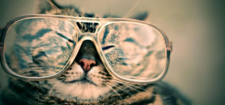 cat wearing large glasses