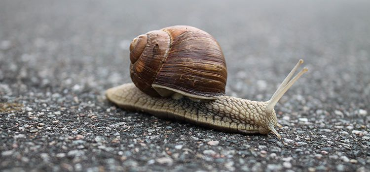 A Snail's Race to the Top