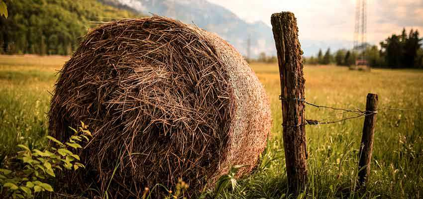 Finding a needle in this hay is easier than finding a site that doesn't call to Google.