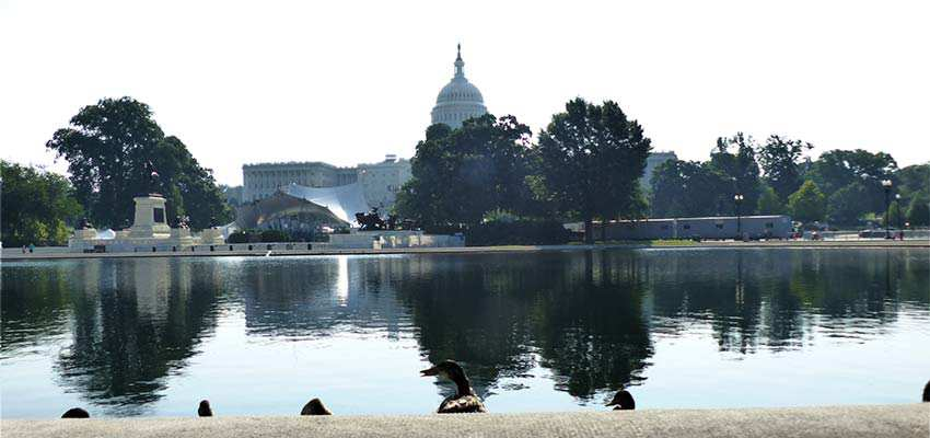 Ducks relaxing at the U.S. Capital.