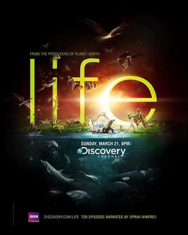 Discovery Channel Life advertsing typography