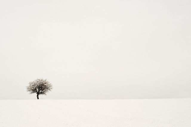 Minimal Wallpaper Desktop Winter Tree