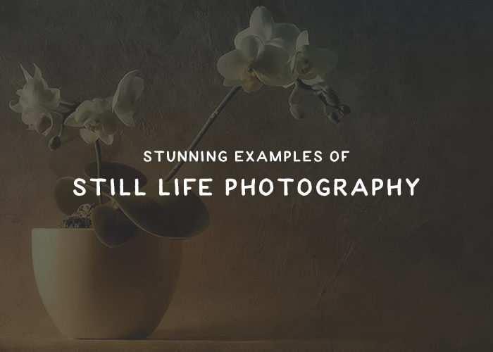 still-life-photo-thumb