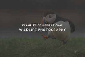 wildlife-thumb