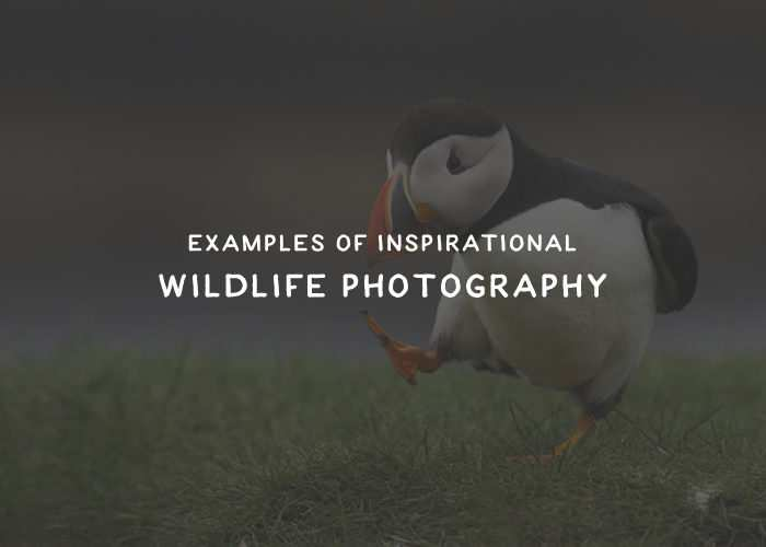 30 Examples of Inspirational Wildlife Photography