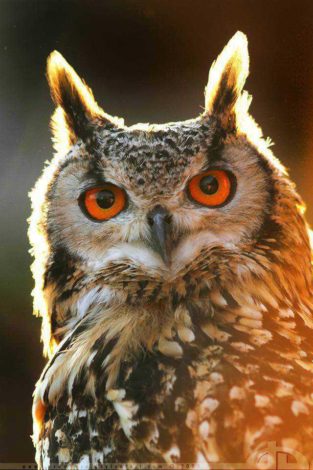 backlit photography photographer shot photo Burnin' owl