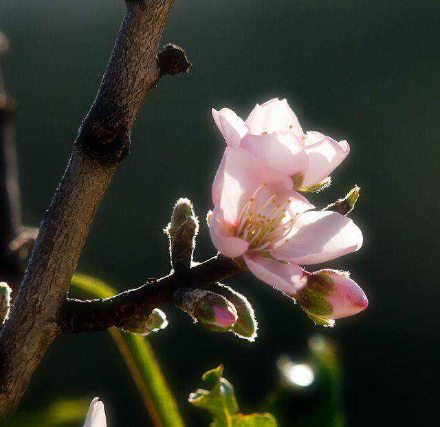 backlit photography photographer shot photo The Last Of The Blossom