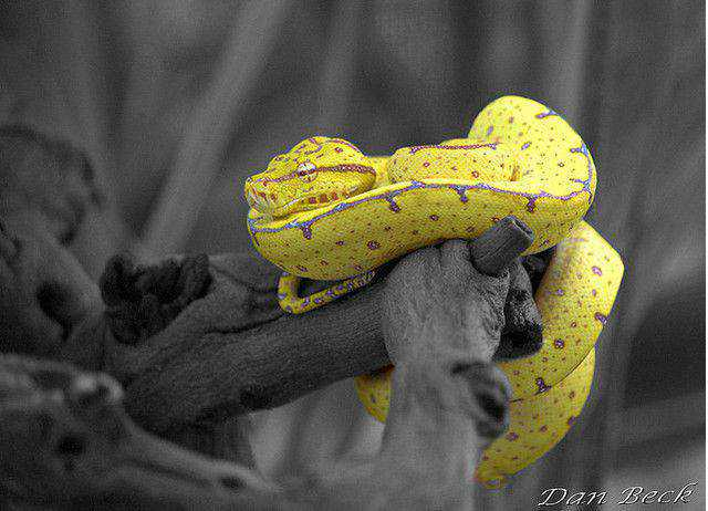 black and white photograph and adding partial color effects Chondro Selective Color