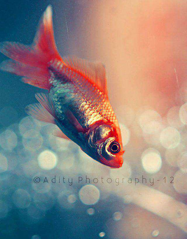 Swim In Deep Bokeh Photography