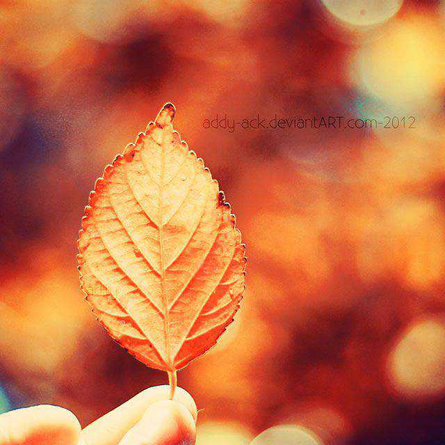 Autumn Leaf Bokeh Photography