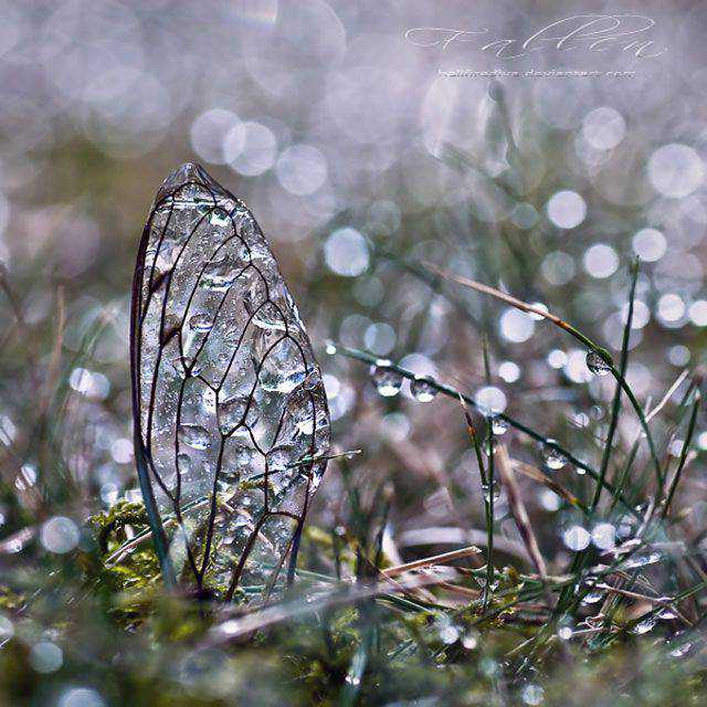Fallen Bokeh Photography