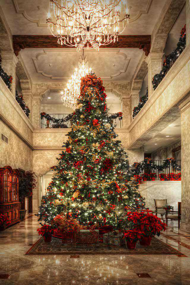 Tree at Christmas in a gallery of Seasonal and Christmas Photography