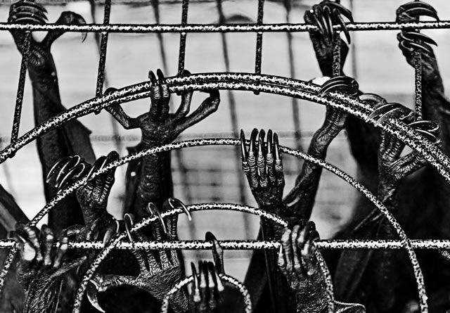 Bats in Cages documentary photography
