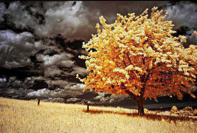 infrared photography Infrared Landscape