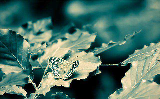monochromatic photo photography Butterfly on Leaves