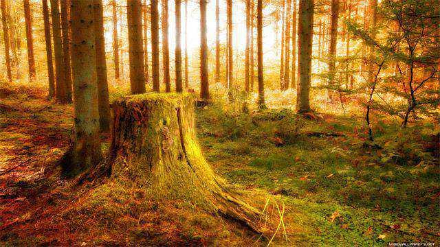monochromatic photo photography Yellow Nature Wallpaper