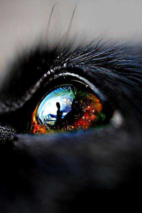 Dog Eye photography super macro