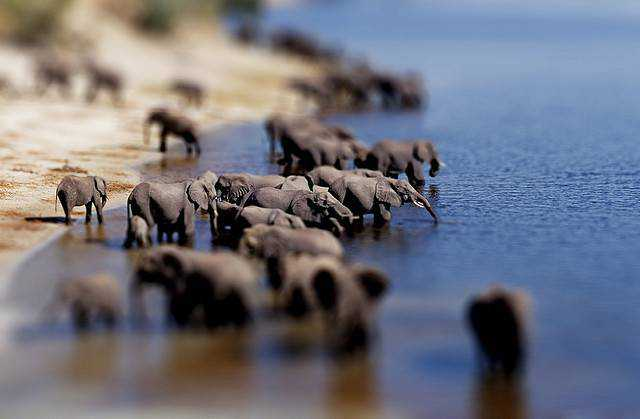 tilt-shift photography miniature Elephants