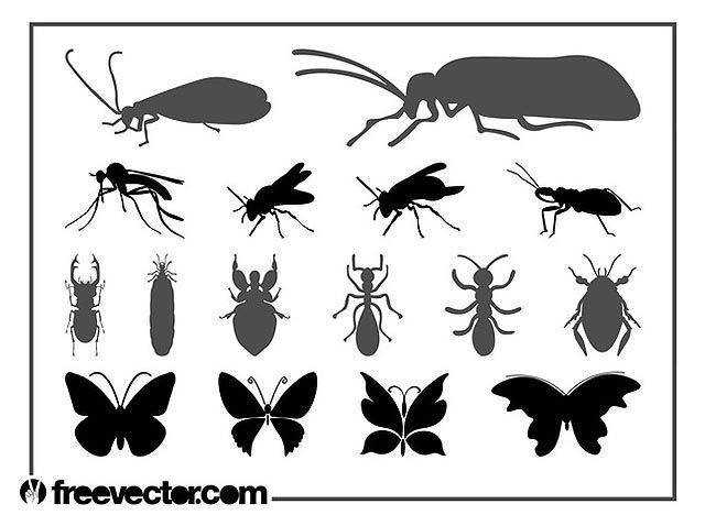 Insects Graphics Set fresh best free vector packs kits