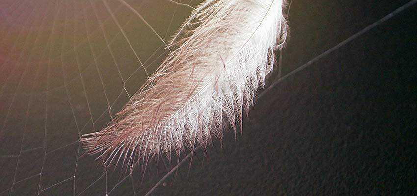 A feather stuck in a spider web.