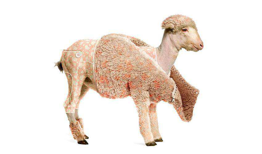Creating a Lambs Coat in Photoshop